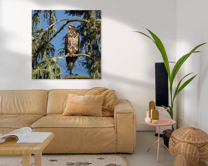Impression: Bald eagle in nature sur Menno Schaefer