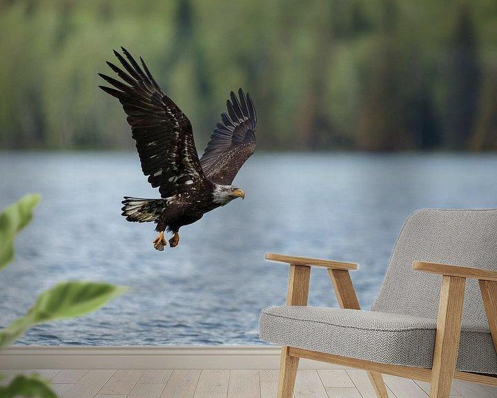 Impression: Bald eagle flight sur Menno Schaefer