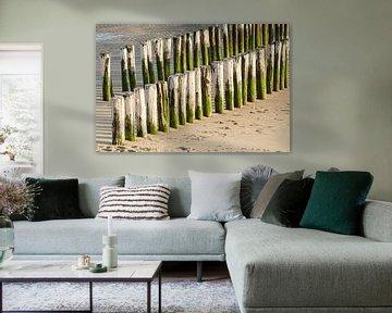 Twee rijen wit groene paalhoofden op een strand in Zeeland van Tonko Oosterink