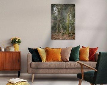 Mysteriöses Bild, Hoekelumse Wald von Elbertsen Fotografie