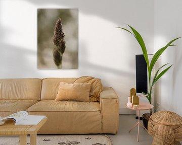 The simple beauty of grass van Kristian Oosterveen