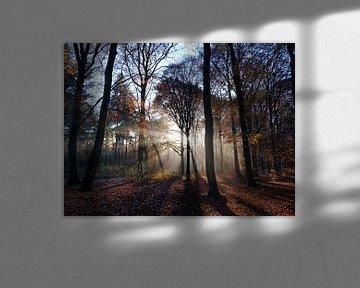Sonnenstrahlen durch den Wald (Ede, Niederlande) von Ben Nijenhuis