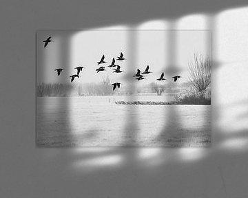 Een groep wulpen vliegt boven het bevroren weiland van Fotografie Jeronimo