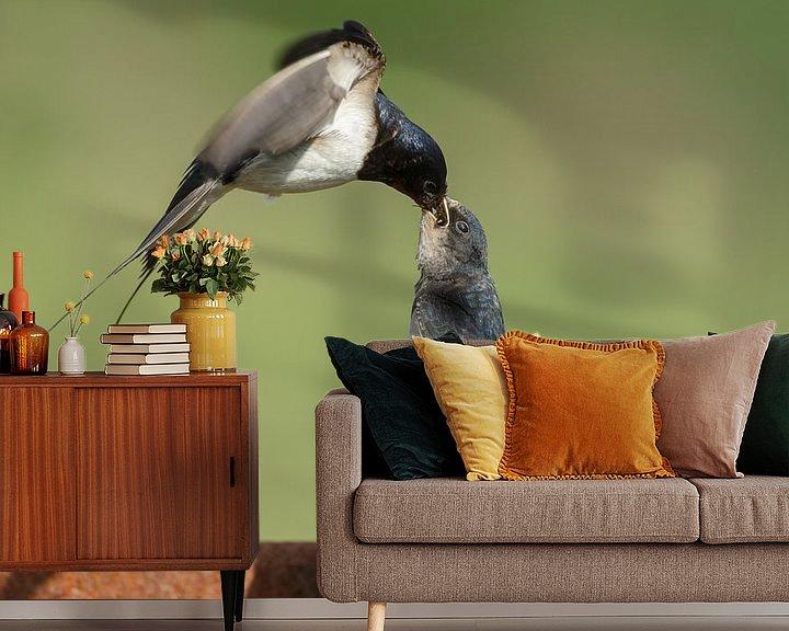 Beispiel fototapete: The barn swallow (Hirundo rustica) von Menno Schaefer