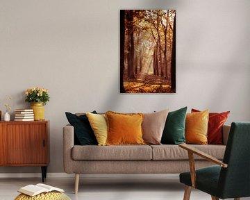 Zonnestralen in het bos von Fotografie Jeronimo