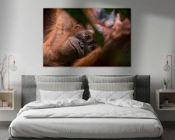Jonge Orang-oetan in de jungle van Bukit Lawang, Sumatra, Indonesië von Martijn Smeets