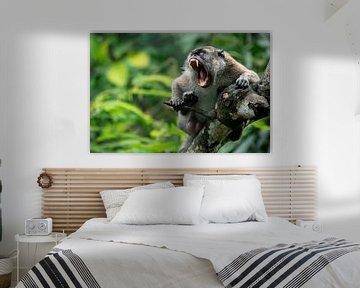 Makaak in de jungle - Sumatra, Indonesië van Martijn Smeets
