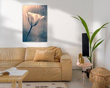 Künstlerische Tulpe, Foto- und Kunst in einem. von François Kerremans