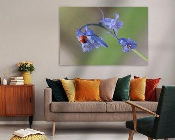 Lieveheersbeestje van Rene van Dam