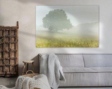 Eenzame boom van Bob Luijks