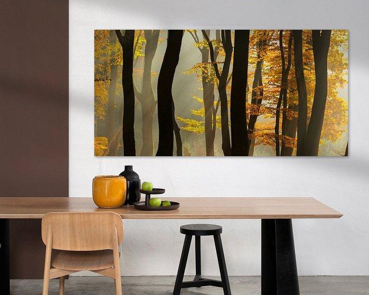 Impression: Sunlight in the autumn woods sur Fotografie Egmond