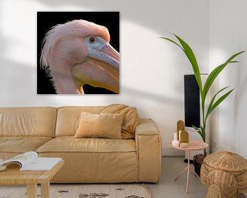 Close-up pelikaan von Eelke Cooiman