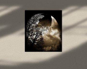 Schwarzer Raabe in der Nacht von Nicky`s Prints