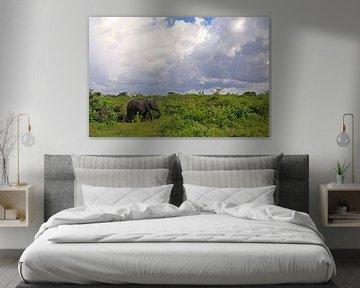Olifant in het Udawalawe N.P. in Sri Lanka sur Antwan Janssen