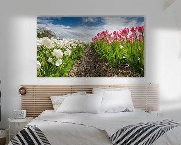 Tulpenveld in de  flevo polder van Fotografiecor .nl