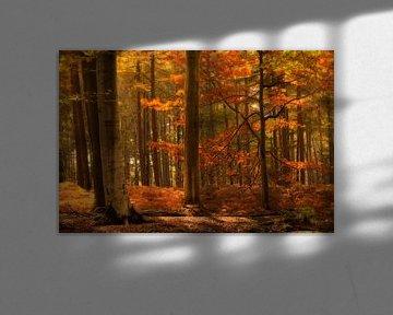 Herfstbos van Ellen Driesse