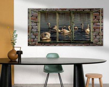 Fensterblick - Schwäne von Christine Nöhmeier