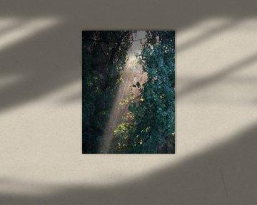 Säule von Sonnenlicht von Gera Wijlens