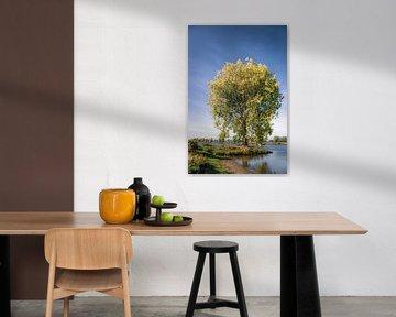 Herfstboom aan de Maas van Ingeborg Ruyken
