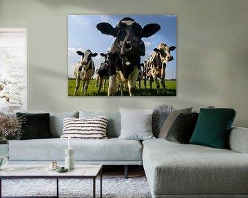 Gruppe von Kühen in die Linse von Sjoerd van der Wal