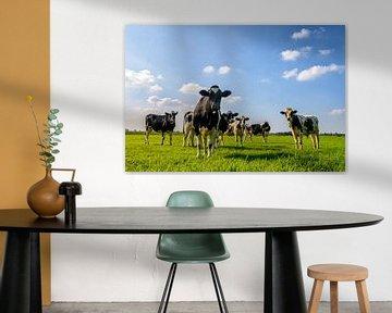 Koeien in de wei van Sjoerd van der Wal