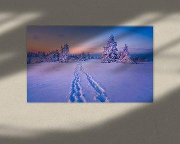 Winter Wonderland van Xander Haenen
