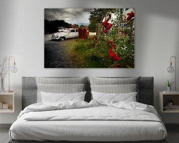 Red roses van Sonja Pixels