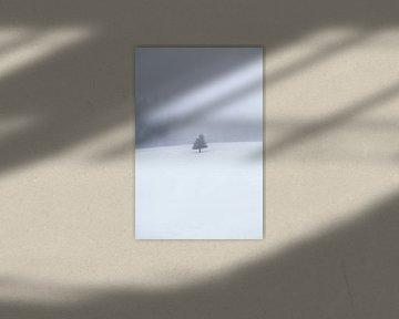 single tree on snow in fog van Olha Rohulya