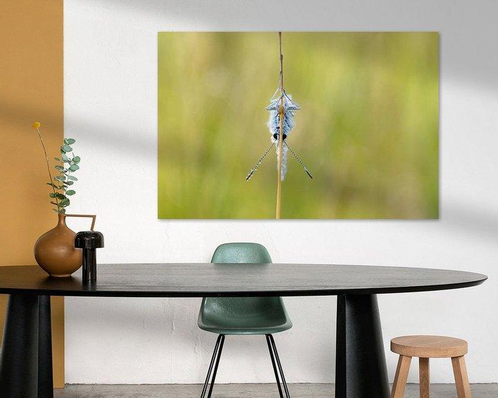 Beispiel: Vlinder op zijn kop hangend aan een strohalm. von Astrid Brouwers