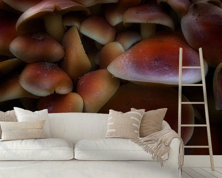 Sfeerimpressie behang: Rode zwavelkop van Ruud Peters
