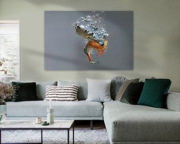 IJsvogel - National Geographic winner!! Vrouwtjes ijsvogel in actie! van Dirk-Jan Steehouwer