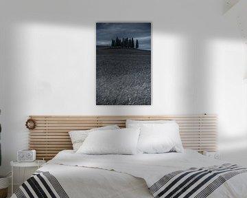 Cipressi di San Quirico d Orcia. . Het cipressenbos in Toscane van Dennis Wierenga