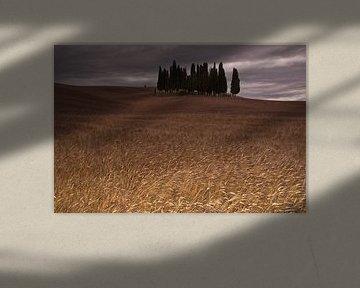 Cipressi di San Quirico d Orcia. Het cipressenbos in Toscane van Dennis Wierenga