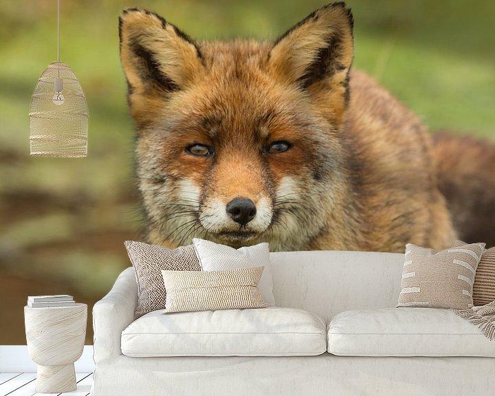 Sfeerimpressie behang: Oog in oog met een vos van Ilya Korzelius