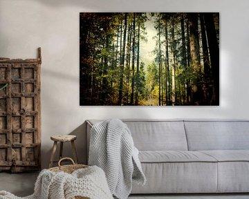 Bayerischer Wald in Lomo effect van PhotoArt Thomas Klee