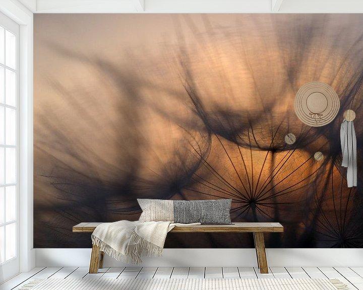 Sfeerimpressie behang: Zonsopkomst achter uitgebloeide paardenbloem. van Astrid Brouwers