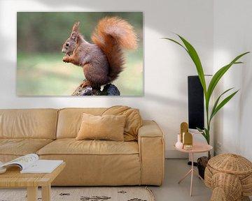 Eekhoorn op boomstam. von Astrid Brouwers