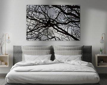 Oiseau, Corneille, Choucas des tours ou Raven dans un arbre nu sur fond de ciel gris sur Ronald H