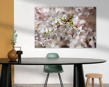 springtime! ... Under The Cherry Tree 01 sur Meleah Fotografie