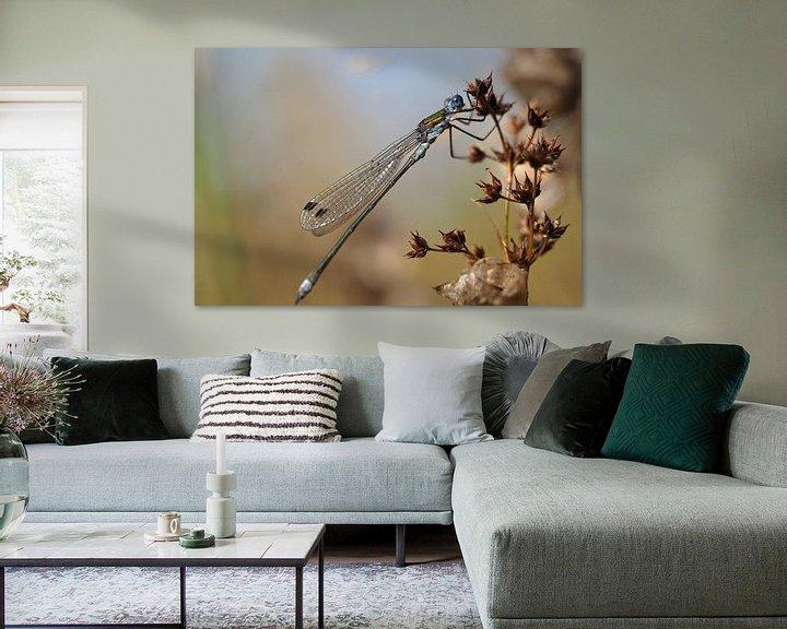 Beispiel: Lantaarntje (waterjuffer) von Astrid Brouwers