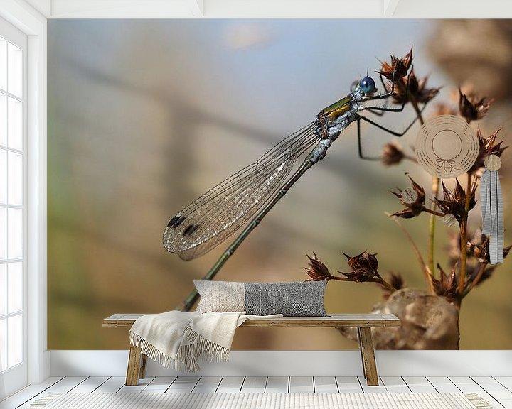 Beispiel fototapete: Lantaarntje (waterjuffer) von Astrid Brouwers
