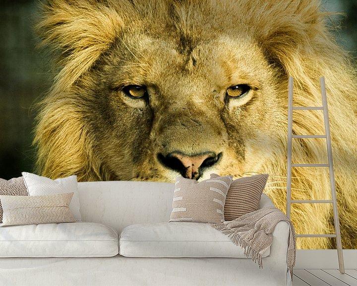 Sfeerimpressie behang: Mannetjes Leeuw  van Sandra Kuijpers
