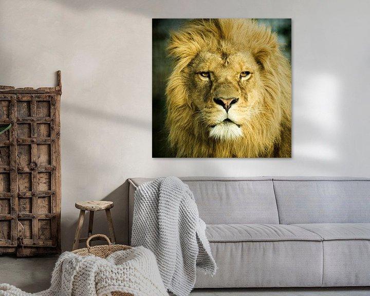 Sfeerimpressie: Mannetjes Leeuw  van Sandra Kuijpers