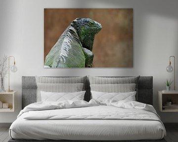 Groene leguaan (Iguana iguana) van Astrid Brouwers