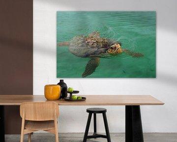 Zeeschildpad (Cheloniidae) van Astrid Brouwers