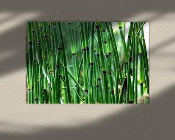 Bamboe bos van Dandu  Fotografie