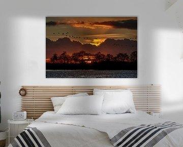 Ganzen bij Zonsondergang