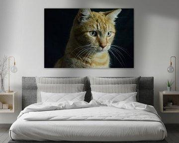 Dutch cat van Tess van Tilburg
