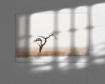 Eenzame boom van Paul Arentsen