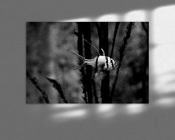 eenzame tropische vis van Dandu  Fotografie